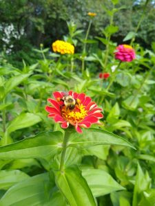 Colorful flowers and a bee